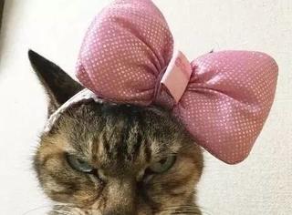 日推网友最近搞了个「谁拍猫拍得最烂」比赛,哈哈哈哈,真有瘾!