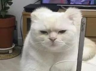 国外一网友家的猫,时刻都是一脸嫌弃与无奈,哈哈感受下...