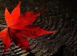 如何拍出惊艳的落叶?思路请收下!
