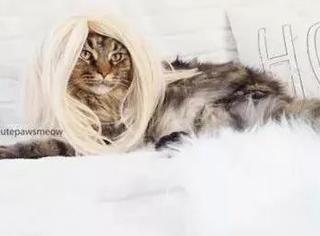 这位猫奴可以说是玩猫界的高手了,这么玩,还活着的很少见了...