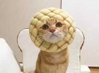 这猫超乖竟乖乖让主人给戴各种造型羊毛毡头套,瞬间萌爆了...