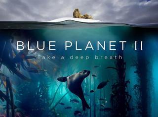 评分高达9.9!看完BBC最新纪录片《蓝色星球2》,想给大自然下跪