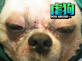韩国流行起了给宠物整容,你会带ta这么做吗?