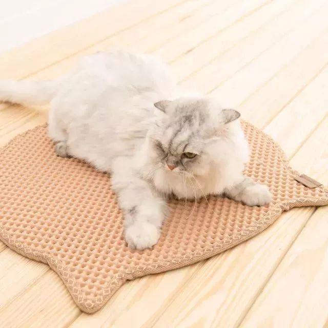 网友表示自家猫特别擅长天女散花,简直要把铲屎的搞崩溃了…