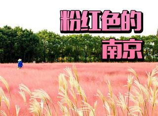 虽然少女心满满的粉红花海下架了,但是南京的美食还在啊!