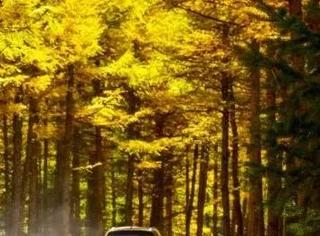 比草原天路更美,一路串联两个国家森林公园,这条自驾路藏有北京周边绝美秋色