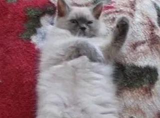 这网友是专门画猫的灵魂画手,第一张就被笑喷了...