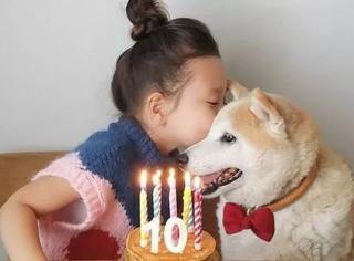 萌化了!3岁混血小萝莉和一只胖柴犬的甜蜜日常……
