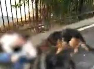"""家犬当街撕咬小孩致重伤:""""我家狗不咬人""""到底害了多少人?"""