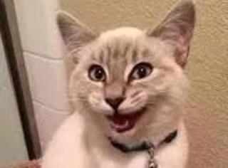 网友拍到一只长得有点随意的猫,让人看了后:这次让你们先吸...