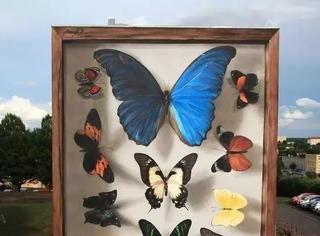 这个巨大的蝴蝶标本,原本竟然只是面无聊的墙...