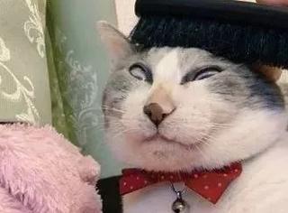 主人给猫梳毛,但因猫毛有点紧,结果...