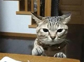 推主在吃鲱鱼罐头,猫以为只是普通的鱼也想吃,结果闻了下后...
