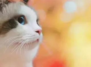 主人带猫外拍秋天的照片,真是美到哭,来感受下...