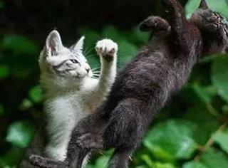 推主出门自带逗猫棒抓拍猫的逗B瞬间,简直张张笑喷饭...