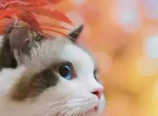 现在这个年头,连一只猫都长得比自己好看!