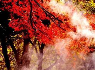 还在迷恋日本的红叶季?拿好这份中国赏秋地图,从现在开始到明年2月都看不完