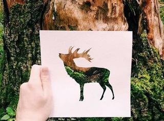 你和自然摄影达人之间,就差一张薄纸