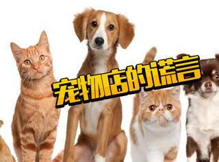 女子花百万购猫负债累累却发现被骗,宠物店几大谎言你知道吗?