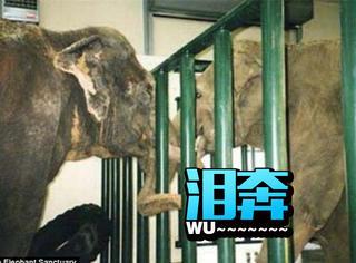 分离22年后再相见,这对大象的相认瞬间好让人感动