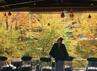 从浅草出发,住进和风画卷里的红叶假期