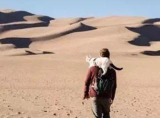 这对情侣辞去工作,买了辆面包车,带上自家猫去旅行