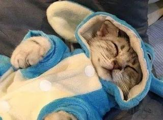 主人给猫咪买了套史迪仔装,给它穿上之后,简直可爱到家了...