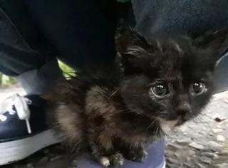 网友旅行时遇一只碰瓷猫,被它这水汪汪大眼睛迷得不行,最后...