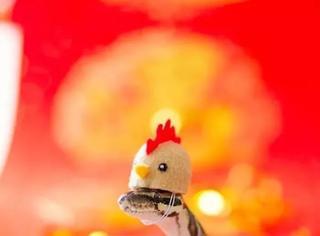 这些全世界最可爱的小蛇,让你对毒蛇的印象完全改观~