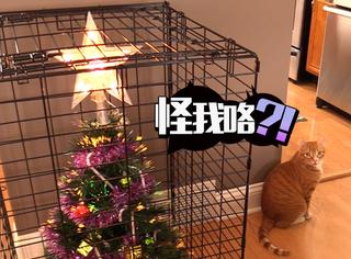 如何正确摆放圣诞树,这些铲屎官们都疯了
