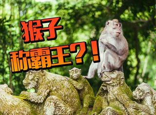 这里猴子是老大?!想要玩的开心,得先藏好眼镜钱包和手机!