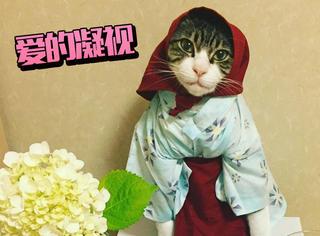 料理猫:欢迎回家,您是先吃饭呢还是先洗澡呢?