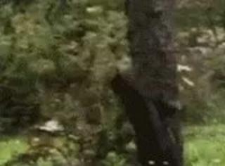 猫在外面遇到一只松鼠,结果它跑到树上去了,想抓,结果
