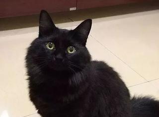 网友整理:养黑猫是一种什么体验?简直太形象了,笑喷...