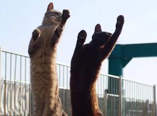 """一位摄影师拍下了100张傻猫打""""喵星拳""""照片,萌翻了!"""