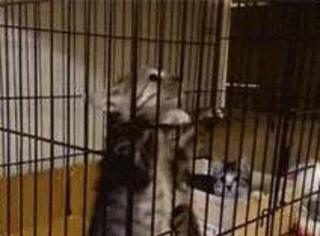 网友救助了一窝小猫,其他喵都玩疯了却一只非常淡定