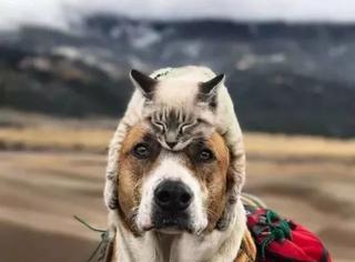 当徒步旅行爱好者的两只宠物在旅途中相爱,画面太有爱了!