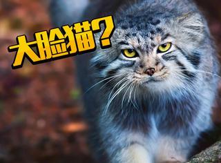 """捡回家的流浪猫越长脸越大?原来是""""抱错小孩"""""""