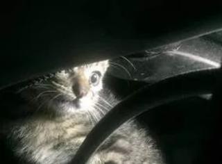 网友开车时,突然冲出一小猫,最后...