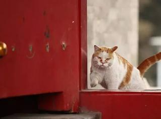 其实,故宫才是最佳吸猫网红圣地