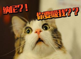 魔都这8家吸猫圣地,喝咖啡吃甜品吸猫咪,幸福的要飞起来!