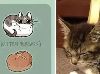 德国日裔画家已证明:猫咪其实是只面包精啊!