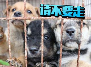 20岁大男孩帮助850只流浪狗,感谢温柔的你们和世界