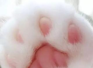 主人喜欢拍自家猫的粉嫩爪爪,每张都让人快流口水了