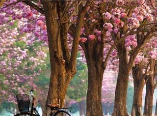 你在国内穿秋裤,我飞泰国25度,看花、戏水、春节都不误