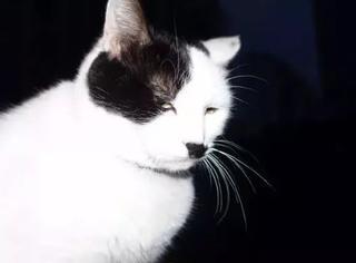 网友家的猫坐键盘上,偶然竟打出这几个字,好吓人...