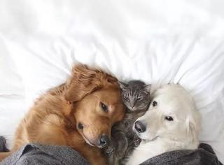两只狗狗和一只猫能发生什么爱情故事?