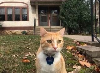 美国一只橘猫入了图书馆黑名单,事闹大了...