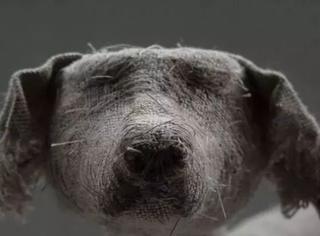 这个雕塑家的作品竟全是布做的狗狗?!