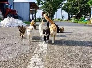 推主遇到一群流浪猫,于是赶紧拍照,没想它们...